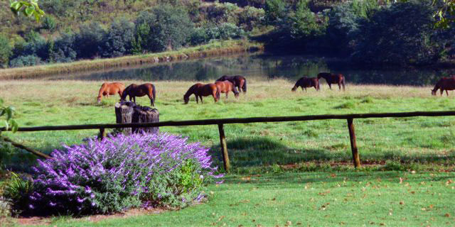 2nd-dam-with-horses
